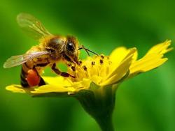 Côn trùng có vai trò quan trọng trong quá trình đơm hoa kết trái của nhiều loài thực vật