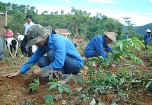 Đoàn thanh niên huyện Cao Phong tham gia trồng cây tại xã Yên Thượng, huyện Cao Phong