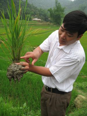 Cán bộ Chi cục Bảo vệ thực vật kiểm tra diễn biến của tập đoàn rầy gây hại trên lúa xuân trà chính vụ và trà muộn trên địa bàn huyện Lạc Sơn
