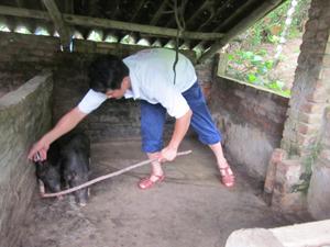 Công tác tiêm phòng bệnh cho gia súc được hộ chăn nuôi xóm 2, xã Sủ Ngòi chú trọng.