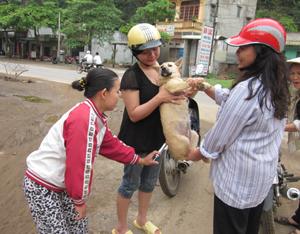 Tháng 4/2012, huyện Tân Lạc triển khai tiêm vác xin phòng dại cho đàn chó đạt tỷ lệ cao.