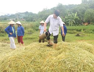 Nông dân xã Phong Phú (Tân Lạc) thực hành sử dụng chế phẩm trộn, ủ rơm rạ.