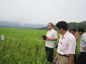 Các đại biểu thăm diện tích trồng khảo nghiệm giống lúa nông hộ tại xã Vĩnh Đồng.