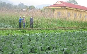 Nông dân xã Mai Hịch (Mai Châu) thực hiện mô hình chuyển đổi cơ cấu cây trồng mang lại thu nhập cao gấp 2 - 3 lần so với cấy lúa.