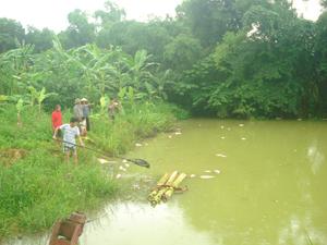 Cá chết hàng loạt tại ao của Công ty khai thác khoáng sản Hoà Bình THT.