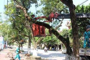 Đội ứng trực của Công ty CP Môi trường đô thị Hòa Bình xử lý cắt bỏ cây xanh đô thị đã già yếu, khô mục.