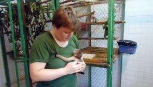 Elke Schwierz và linh trưởng Vooc chà vá chân xám hai tháng tuổi, sinh ra tại Trung tâm cứu hộ.