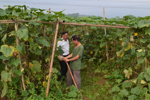 Ông Nguyễn Tri Phức, hội viên NCT thị trấn Mường Khến trao đổi kỹ thuật trồng bí đỏ cho các hội viên NCT đến thăm quan mô hình.