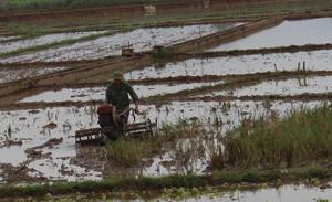 Bà con nông dân xã Thượng Cốc (Lạc Sơn) khẩn trương làm đất, gieo cấy vụ mùa, hè - thu đảm bảo đúng khung thời vụ tốt nhất.