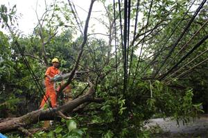 Điện lực thành phố Hoà Bình khẩn trương xử lý sự cố hệ thống dây điện hạ thế bị cây xanh đè lên gây tắc giao thông trên tuyến đường Võ Thị Sáu.