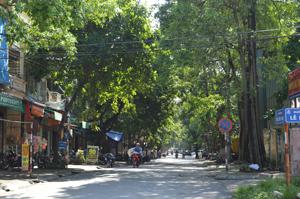 Cây xanh trên đường Điện Biên Phú có nguy cơ gây đổ khi mưa bão.