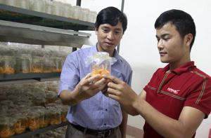 Cán bộ, kỹ sư Trung tâm Ứng dụng và chuyển giao tiến bộ KH&CN kiểm tra mức độ sinh trưởng của Đông trùng hạ thảo nuôi cấy trong môi trường nhân tạo.