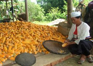 Hiệu quả xóa đói - giảm nghèo vùng đồng bào dân tộc