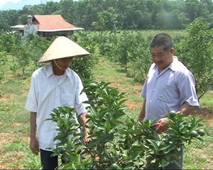 Ông Lương Bá Đích (bên phải), xóm Cả, xã Yên Lạc (Yên Thuỷ) chăm sóc vườn cam của gia đình.
