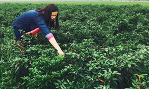 Chị Bùi Như Phong, tiểu khu 4, thị trấn Lương Sơn (Lương Sơn)  chăm sóc mô hình sản xuất  thực phẩm sạch.