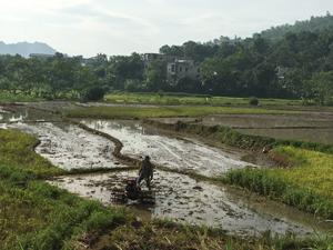 Nông dân trong tỉnh khẩn trương thu chiêm, làm mùa