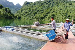 Nghề nuôi cá lồng ở xã Vầy Nưa (Đà Bắc) đã cải thiện nguồn thu nhập kinh tế hộ dân vùng hồ sông Đà.