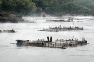Huyện Đà Bắc tập trung thực hiện mục tiêu phát triển bền vững nông nghiệp, nông nghiệp