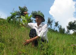 Cán bộ Công ty D&G hòa Bình kiểm tra chất lượng trồng rừng phòng hộ tại xã Xuân Phong, Cao Phong