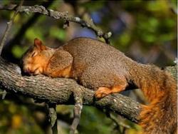 Ngủ nhiều có thể giúp cơ thể động vật chống lại sinh vật ký sinh tốt hơn