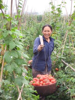 Nông dân xã Sủ Ngòi, TPHB hăng hái thi đua sản xuất xây dựng nông thôn mới