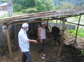 Nhiều gia đình ở xóm Ghên, xã Tiến Sơn vẫn giữ thói quên mất vệ sinh trong công tác chăn nuôi.
