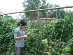 Cán bộ Hội Nông dân huyện kiểm tra mô hình rau hữu cơ tại thị trấn Lương Sơn
