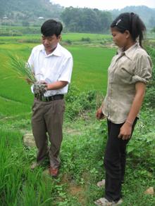 Cán bộ Chi cục BVTV hướng dẫn nông dân xã Tân Vinh (Lương Sơn) cách ngăn ngừa, phát hiện và xử lý kịp thời hiện tượng vàng lá trên diện tích lúa hè thu cấy sớm.