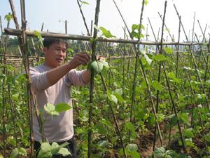 Nông dân xã Mông Hóa (Kỳ Sơn) chăm sóc cây màu vụ hè- thu.