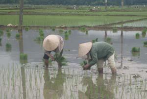 Bà con nông dân xã Nhuận Trạch (Lương Sơn) tập trung cấy lúa mùa 2012.