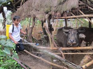 Phun tiêu độc khử trùng khu vực chuồng trại tại xã Xuân Phong  (Cao Phong).