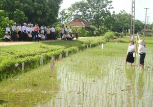 Trong quá trình huấn luyện, các học viên vừa học lý thuyết, vừa thực hành trên đồng ruộng.