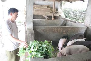 Gia đình nạn nhân CĐDC Phạm Xuân Toàn ở khu 2, thị trấn  Kỳ Sơn phát triển mô hình kinh tế tổng hợp cho thu nhập trên 100 triệu đồng/năm.