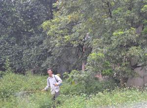 Người dân phun thuốc diệt cỏ ngay phía sau nhà và không trang bị bất cứ bảo hộ lao động nào. Ảnh chụp tại xã Thanh Nông (Lạc Thủy) tháng 6/2013.