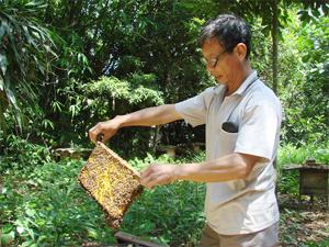 Bác Nguyễn Văn Linh (thôn Liên Hồng 2, xã Khoan Dụ, huyện Lạc Thuỷ) trong lần kiểm tra chất lượng đàn ong.