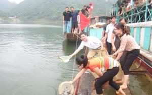 Cá giống được thả xuống hồ chứa thủy điện.