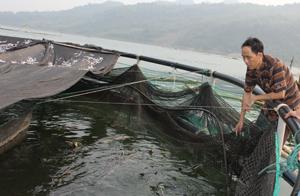 Trung tâm ứng dụng khoa học công nghệ (Sở Khoa học công nghệ) đã xây dựng mô hình thử nghiệm ương giống cá tầm trong bể và nuôi thương phẩm bằng lồng lưới tại xã Hiền Lương (Đà Bắc).