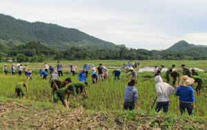 ĐV-TN huyện Đà Bắc tham gia đóng góp ngày công giúp đỡ gia đình chính sách, thiết thực hưởng ứng chiến dịch thanh niên tình nguyện hè 2014.