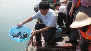 Lãnh đạo Sở NN &PTNT tham gia thả cá giống nhằm tái tạo và phát triển nguồn lợi thủy sản trên hồ Hòa Bình.