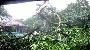 Bão số 2 đã gây thiệt hại tại TP Móng Cái.