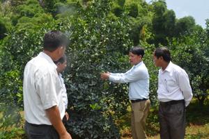 Anh Nguyễn Văn Phúc, Trưởng phòng nông nghiệp huyện Cao Phong trao đổi kỹ thuật trồng cam với các nhà đầu tư.