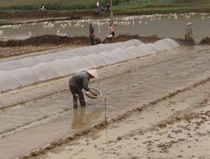 Để đảm bảo chất lượng mạ gieo, Chi cục BVTV khuyến cáo bà con nông dân áp dụng các biện pháp xử lý hạt giống, gieo mạ theo quy trình kỹ thuật, thực hiện quản lý rầy di trú trên mạ mùa (ảnh: nông dân gieo mạ đúng quy trình tại xã Chiềng Châu, Mai Châu).