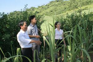 Ông Đinh Công Hợp (ngoài cùng bên trái),xóm Đạy, xã Trung Hòa trên khu đất hiến xây dựng trường mầm non.