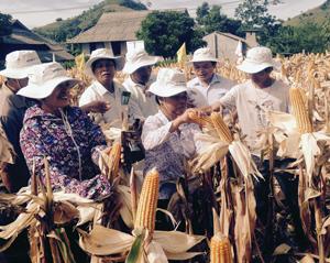 Các đại biểu thăm quan kết quả mô hình thử nghiệm ngô chuyển gen NK66Bt/Gt tại xã Ngọc Sơn (Lạc Sơn).