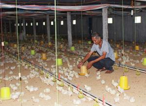 Bác Nguyễn Đình Lâm, xóm 3-2 B, xã Thành Lập (Lương Sơn) là điển hình phát triển kinh tế hộ từ chăn nuôi.