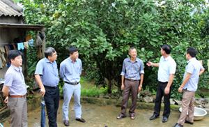 Đoàn kiểm tra đi thực tế mô hình cải tạo vườn tạp trồng bưởi ở xã Nam Phong (Cao Phong).