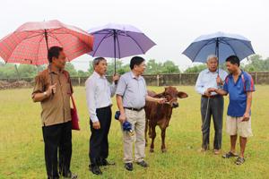 Hộ thụ hưởng dự án xã Ngọc Lương phấn khởi nhận bò do Hội Bảo trợ NTT & TMC hỗ trợ.
