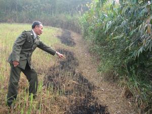Để kiểm soát nguy cơ cháy rừng trên diện rộng, một trong những giải pháp hữu hiệu là đôn đốc người dân phát dọn đường băng cản lửa (ảnh: cán bộ kiểm lâm thành phố Hòa Bình kiểm tra đường băng cản lửa trên địa bàn xã Yên Mông).