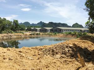 Nước thải chăn nuôi không được trại nuôi lợn xóm Tốt Yên, xã Cư Yên xử lý theo quy chuẩn gây ô nhiễm môi trường nghiêm trọng.