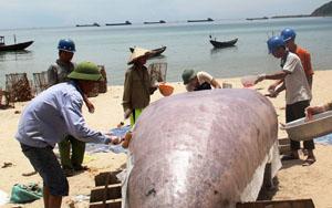 Ngư dân xã Kỳ Lợi (thị xã Kỳ Anh, Hà Tĩnh) sửa sang thuyền để chuẩn bị trở lại đánh bắt - Ảnh: Văn Định